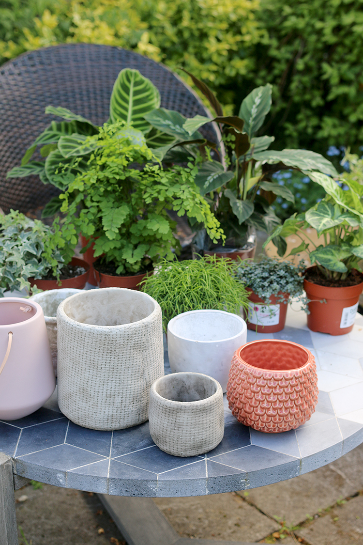 How to Shop for Houseplants - variety of plants and pots ready for potting