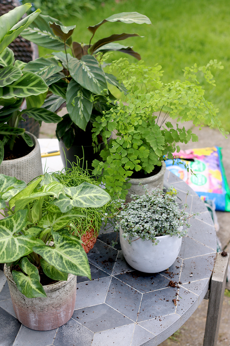 How to Pot Houseplants - variety of houseplants in their pots