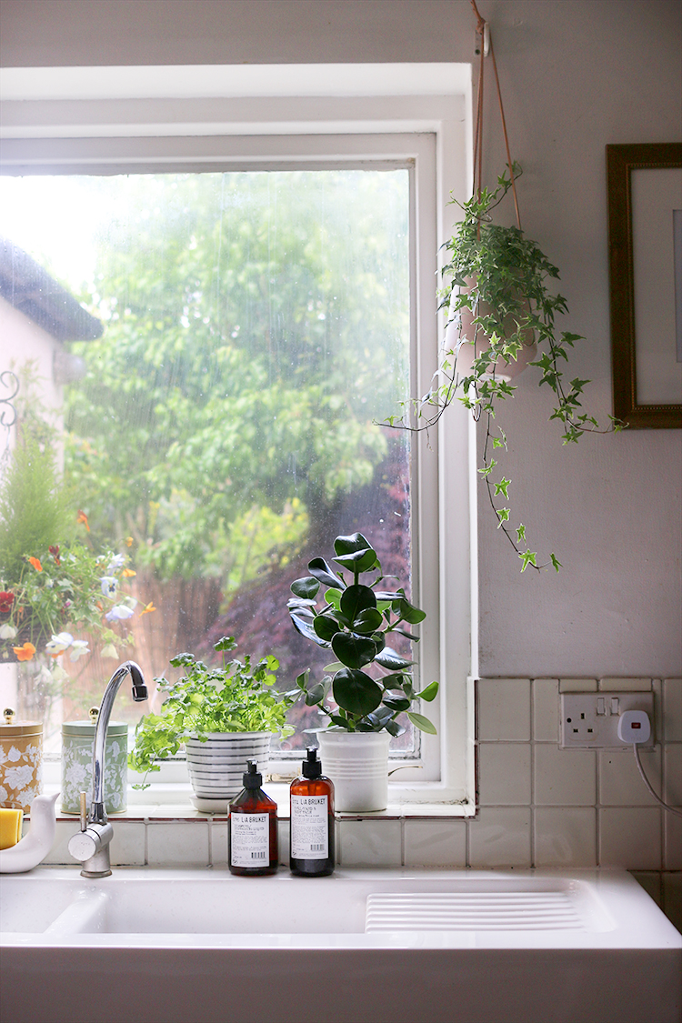 kitchen window with plants