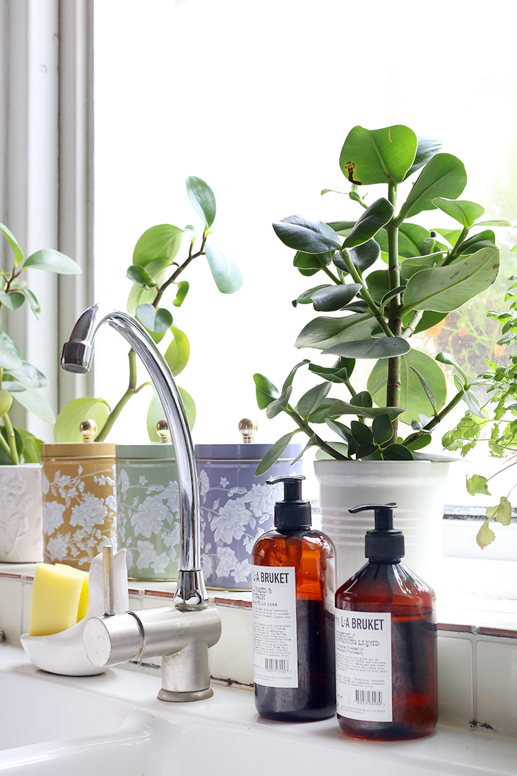 kitchen sink with plants