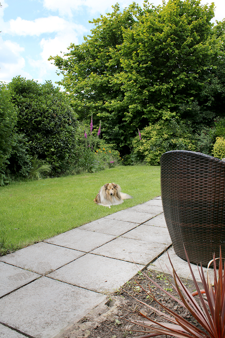back garden with dog