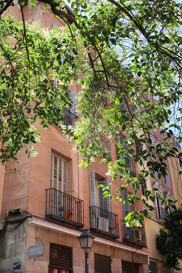 The gorgeous buildings that line the streets of Madrid