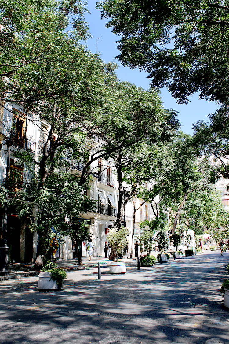 Valencia tree lined street with dappled sunlight