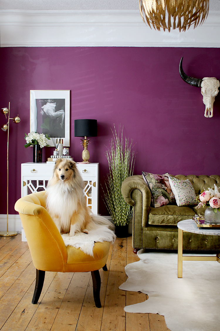 dark purple living room with green and yellow sofas and Sheltie dog on sofa