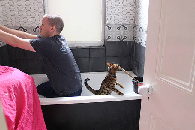 tiling in the bathroom with kitten bengal