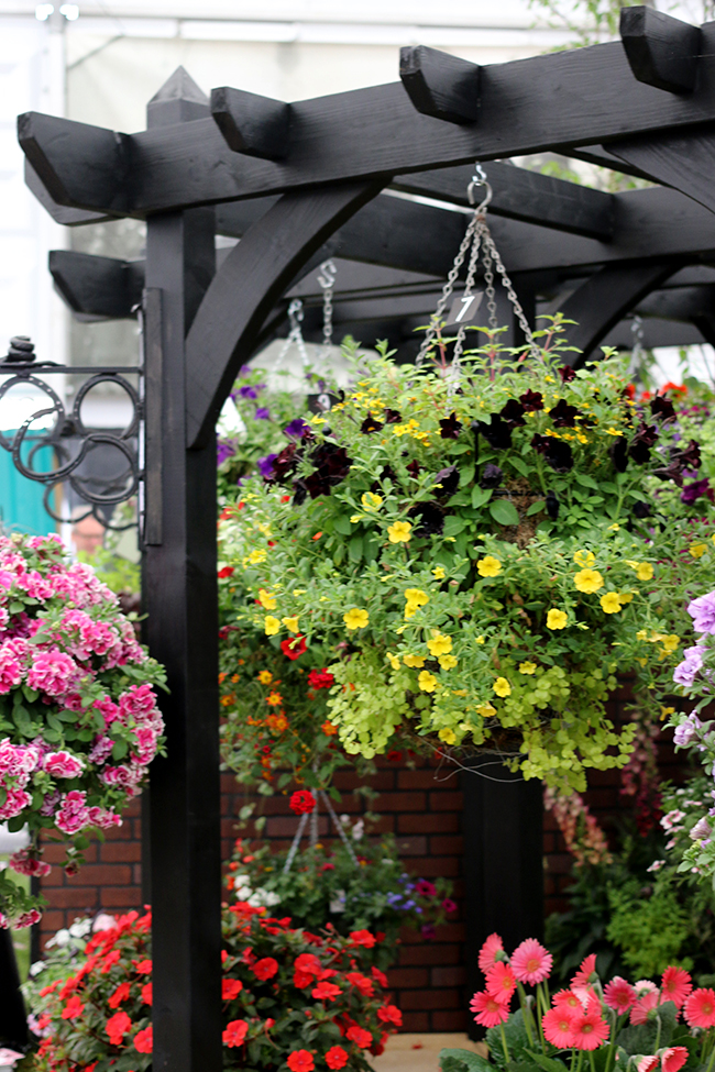 black pergula with hanging baskets from Chelsea Flower Show
