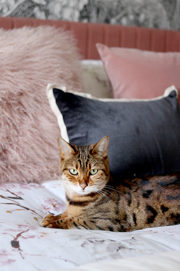 Bengal cat on pink bed
