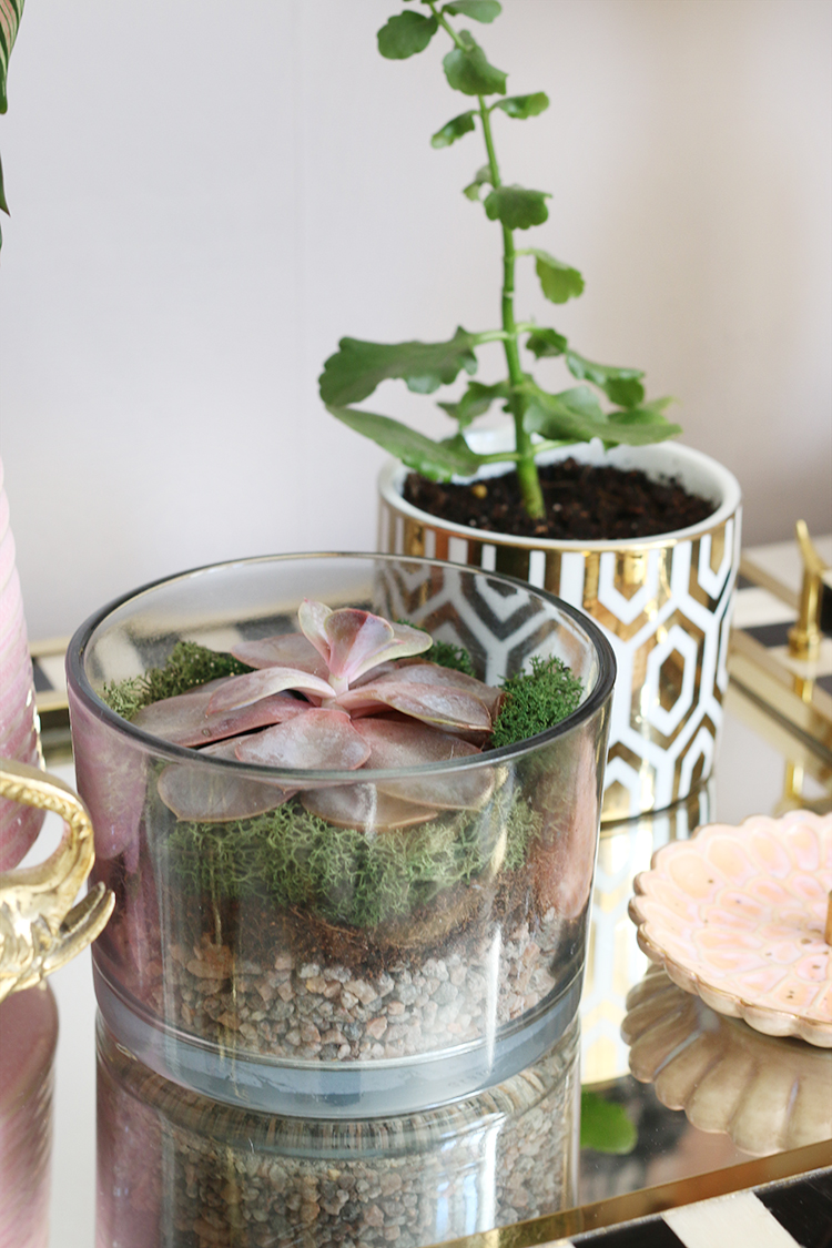 Using old candles as plant pots