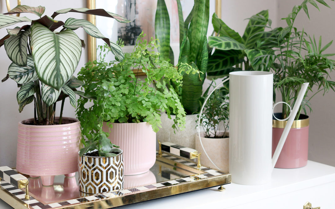 15 of the Best Indoor Watering Cans