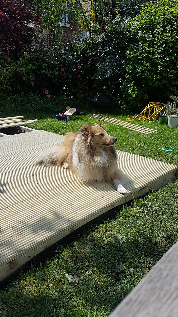 Quito on the new deck