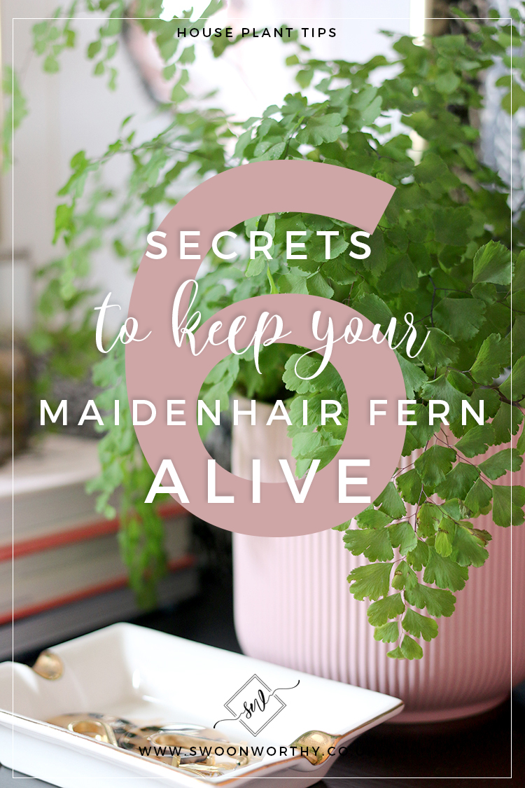 6 Secrets to Keep Your Maidenhair Fern Alive