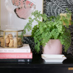 6 Secrets to Keeping Your Maidenhair Fern Alive