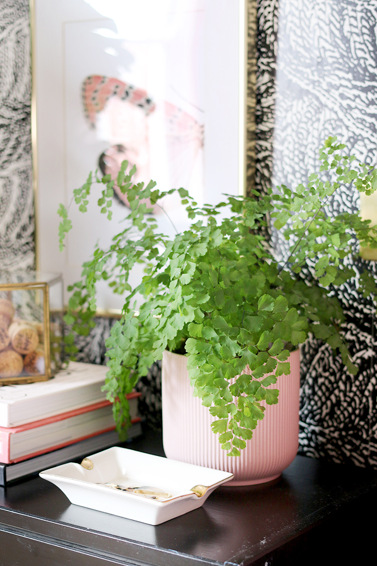 How to Keep Your Maidenhair Fern Alive