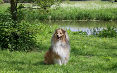 My Outdoor Adventure (by Quito the Sheltie)