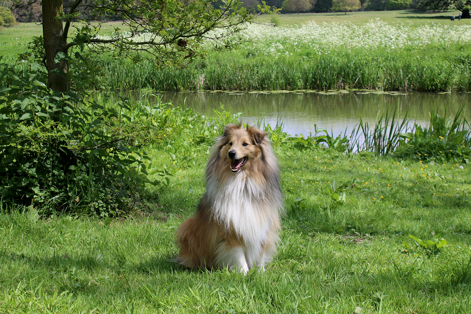 Sheltie Swoon Worthy Blog Outdoor Adventure