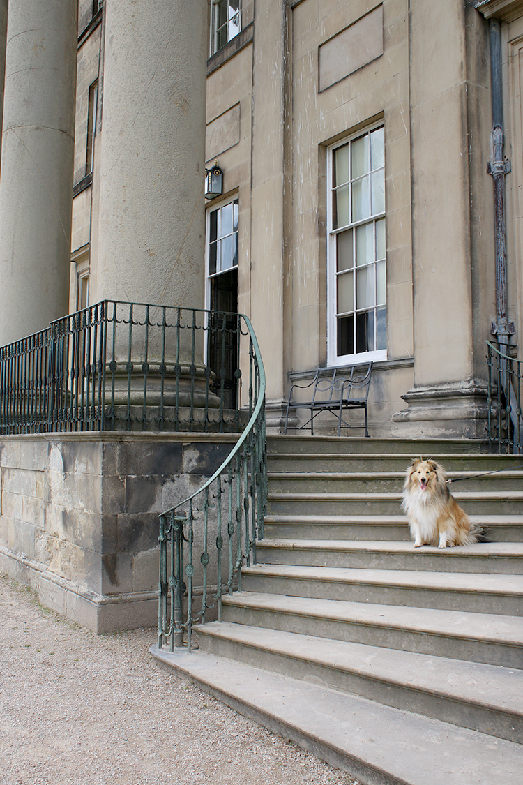 Sheltie on steps of Attingham Park