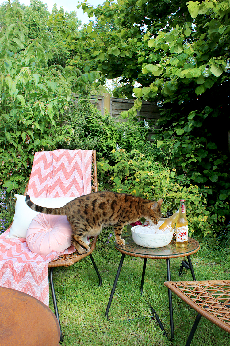 bistro seating area with fire pit and bengal cat
