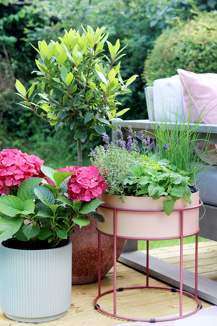 outdoor planters on deck with herbs and hydrangea