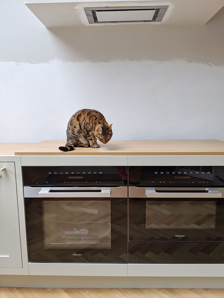 in progress shot - bengal cat on worktops