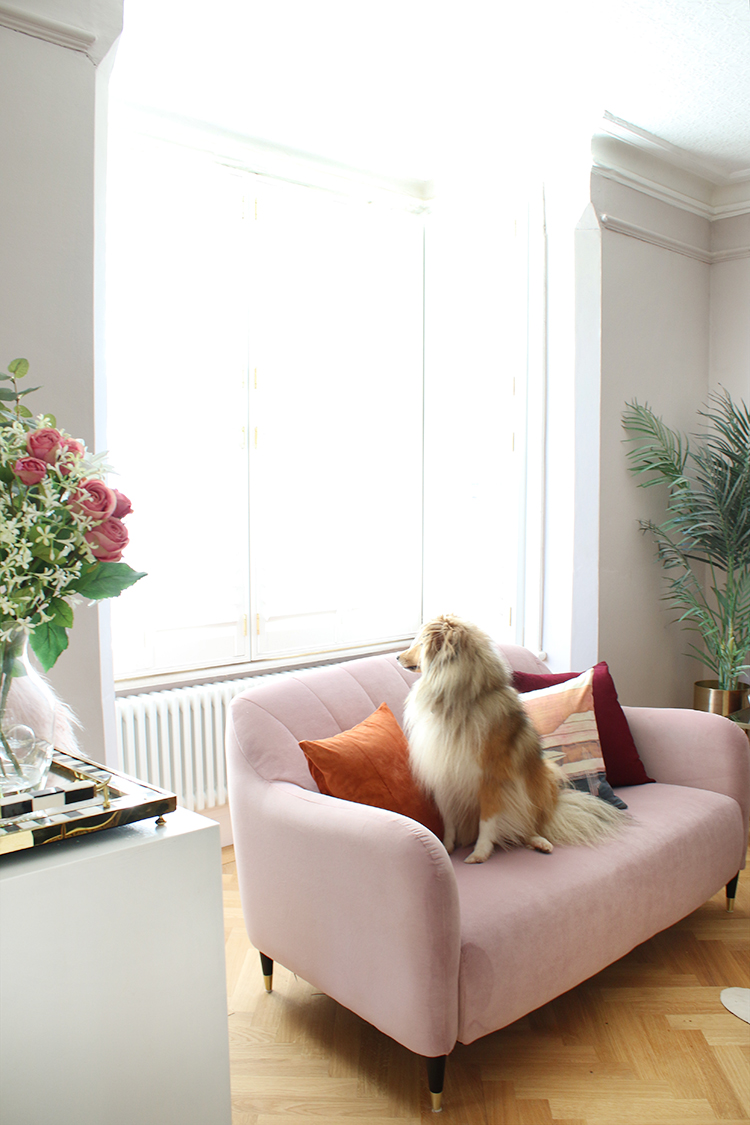 pale pink sofa with dog looking out the bay window