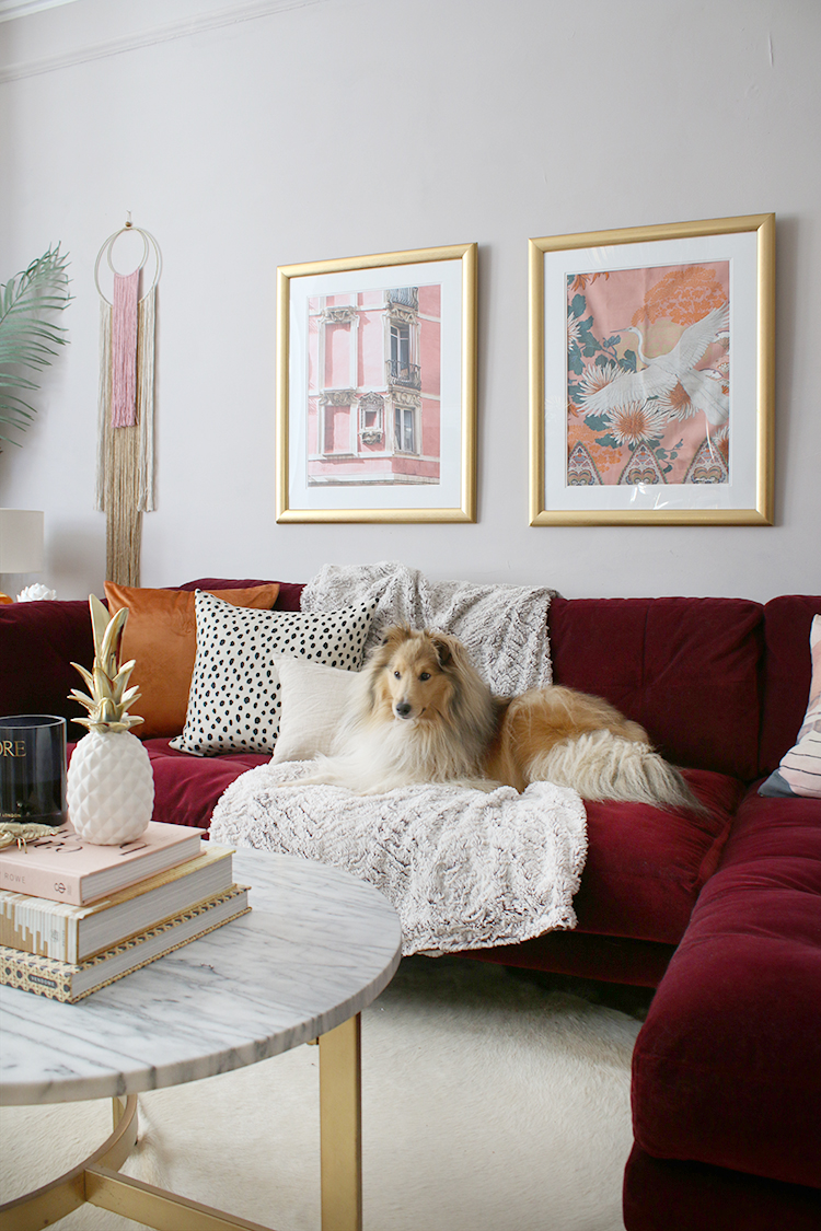 dog on burgundy sofa in glam room