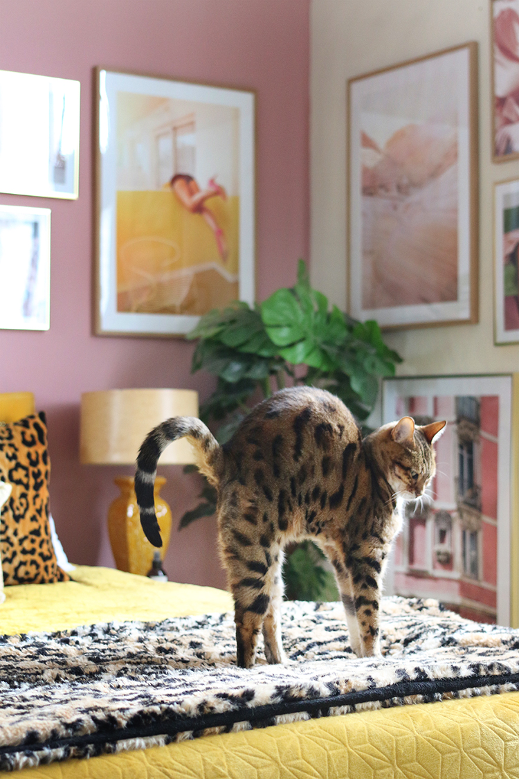 Bengal cat stretching in pink, yellow and leopard print bedroom with gallery wall