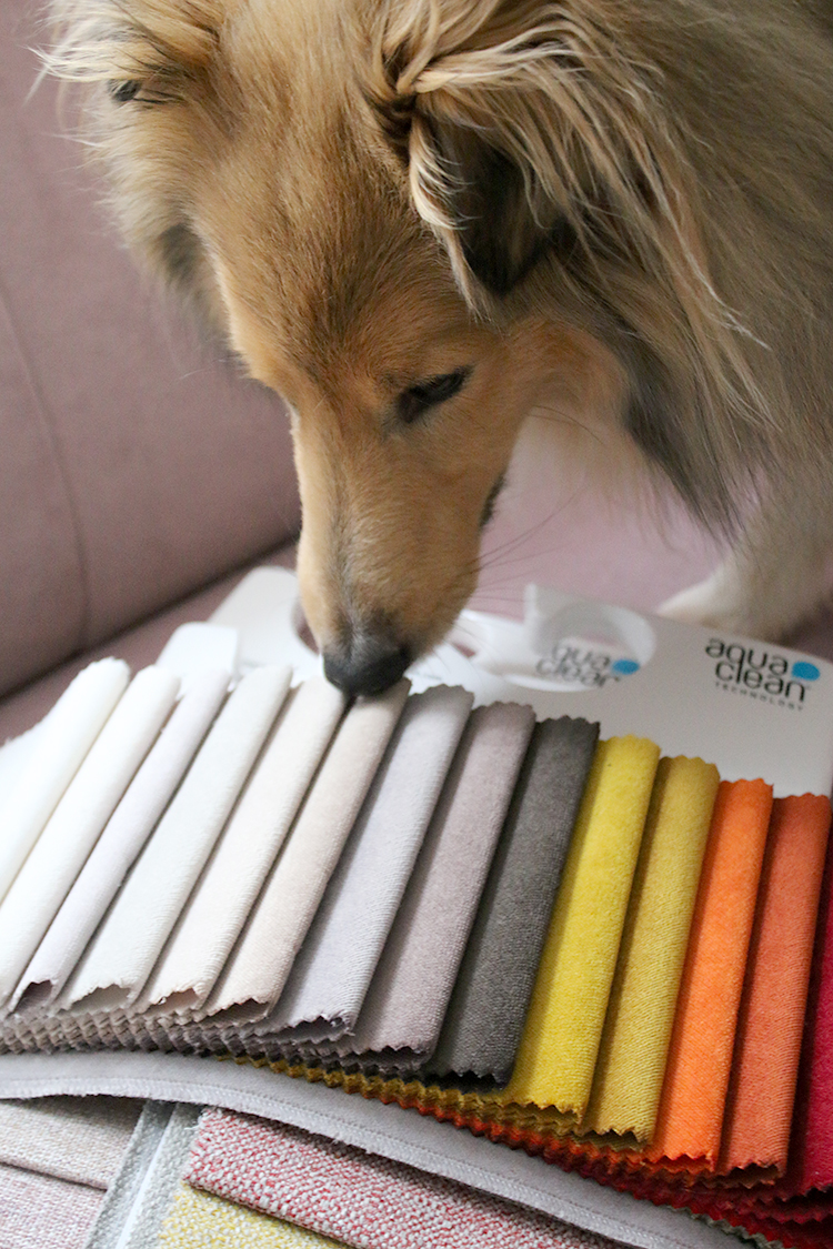Sheltie sniffing the fabric samples