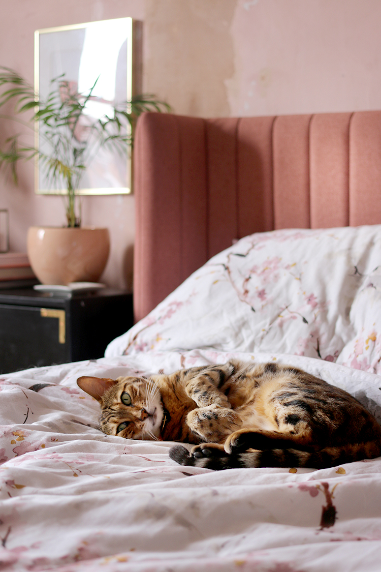 bengal cat on bed in pink room looking cute