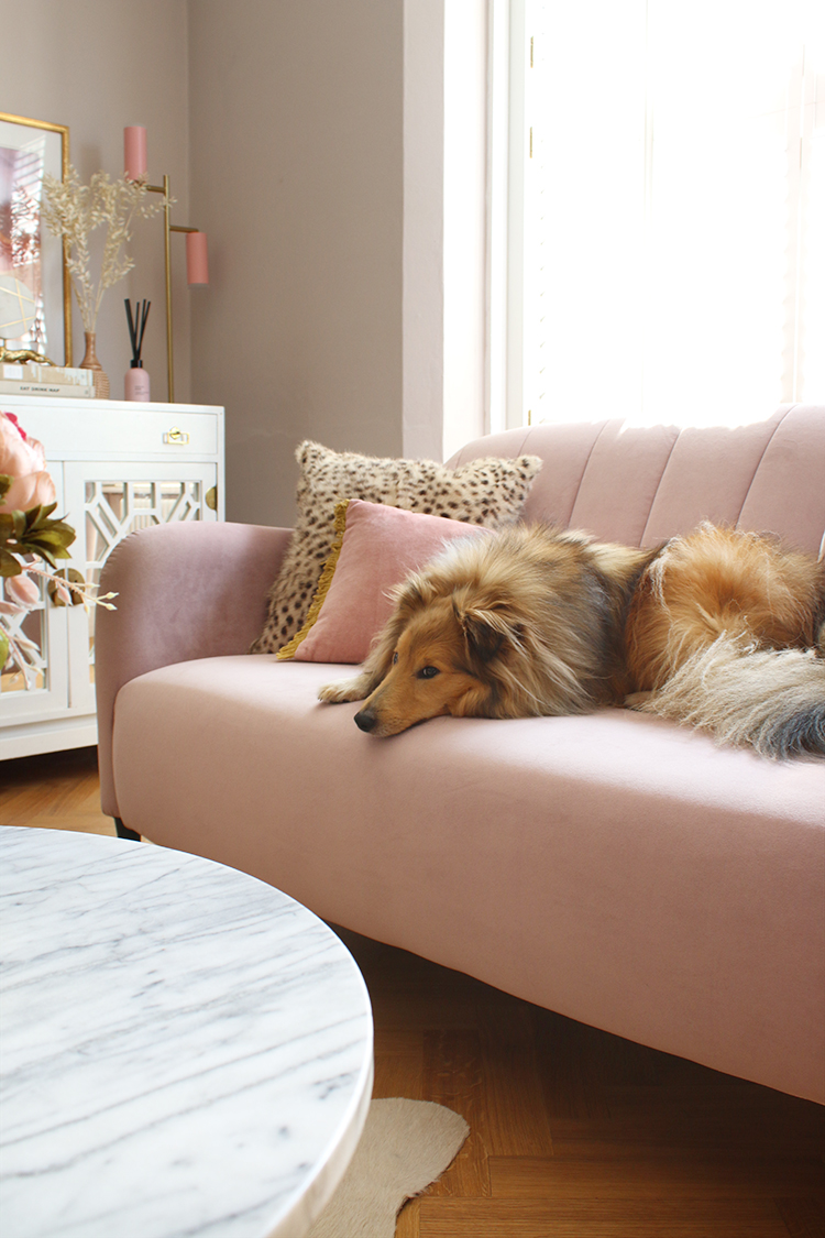pink sofa with sheltie dog lying on top