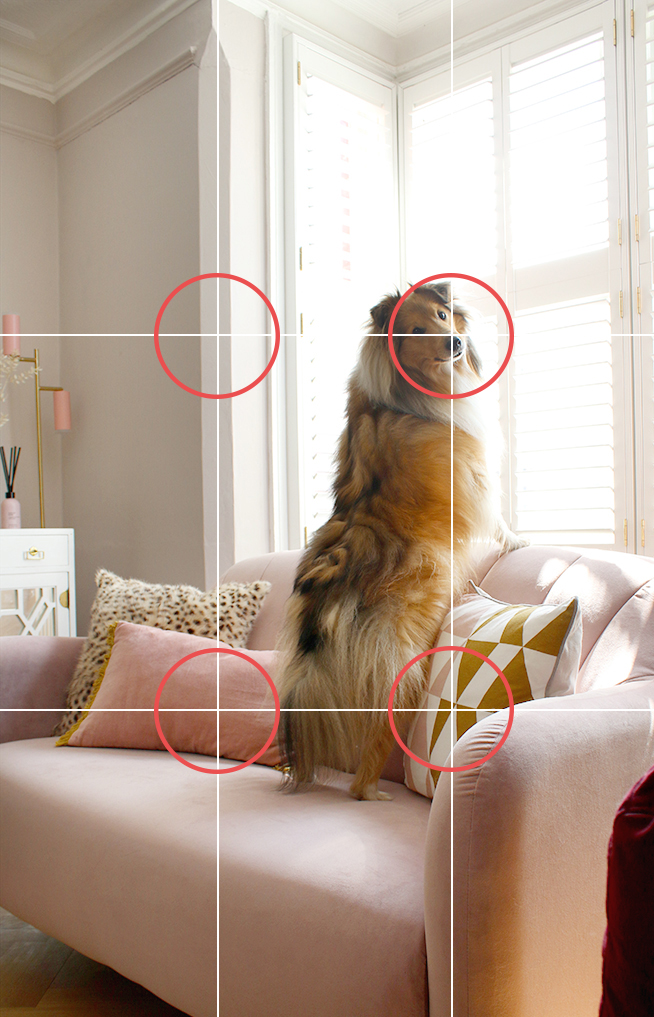Rule of Thirds with Dog Photo