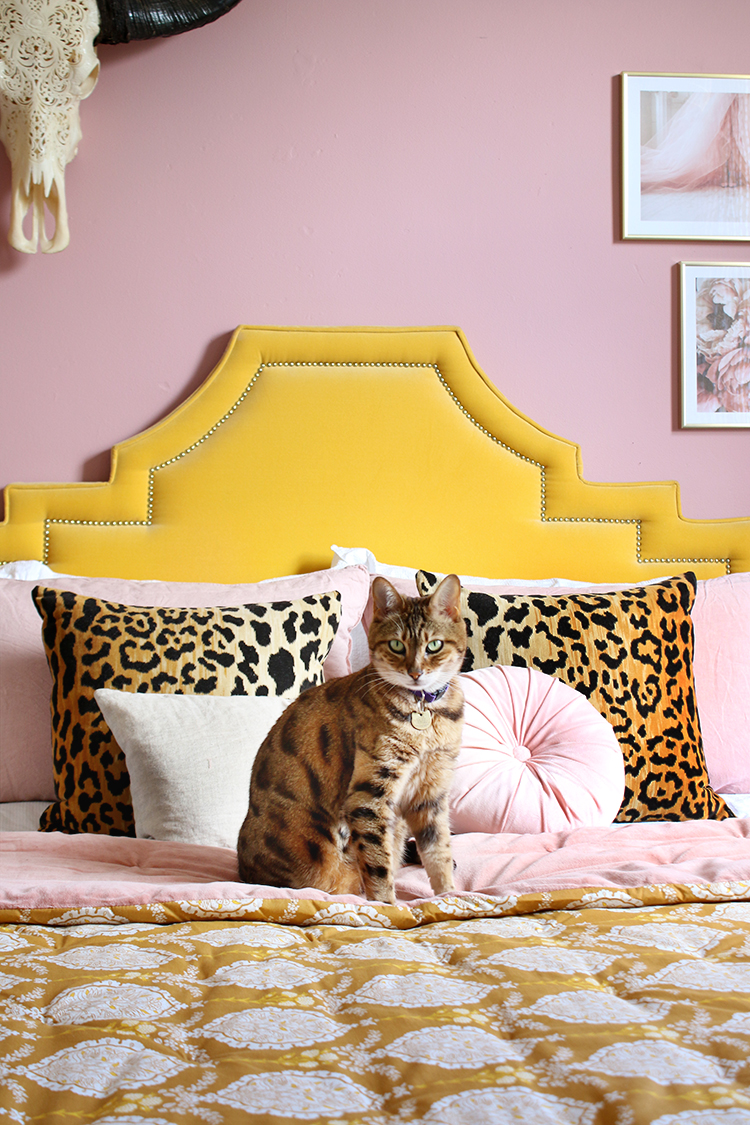 Bengal cat on bed with yellow velvet headboard and leopard print cushions