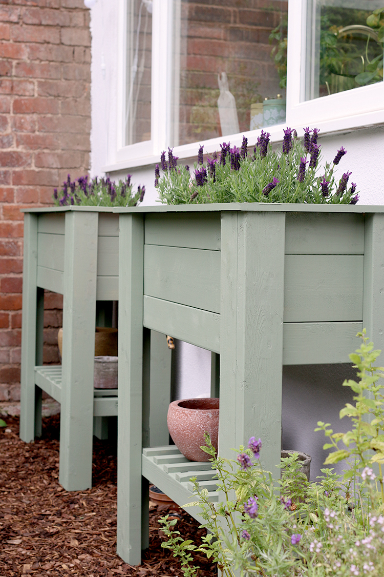 Pair of raised standing planters in green with french lavender