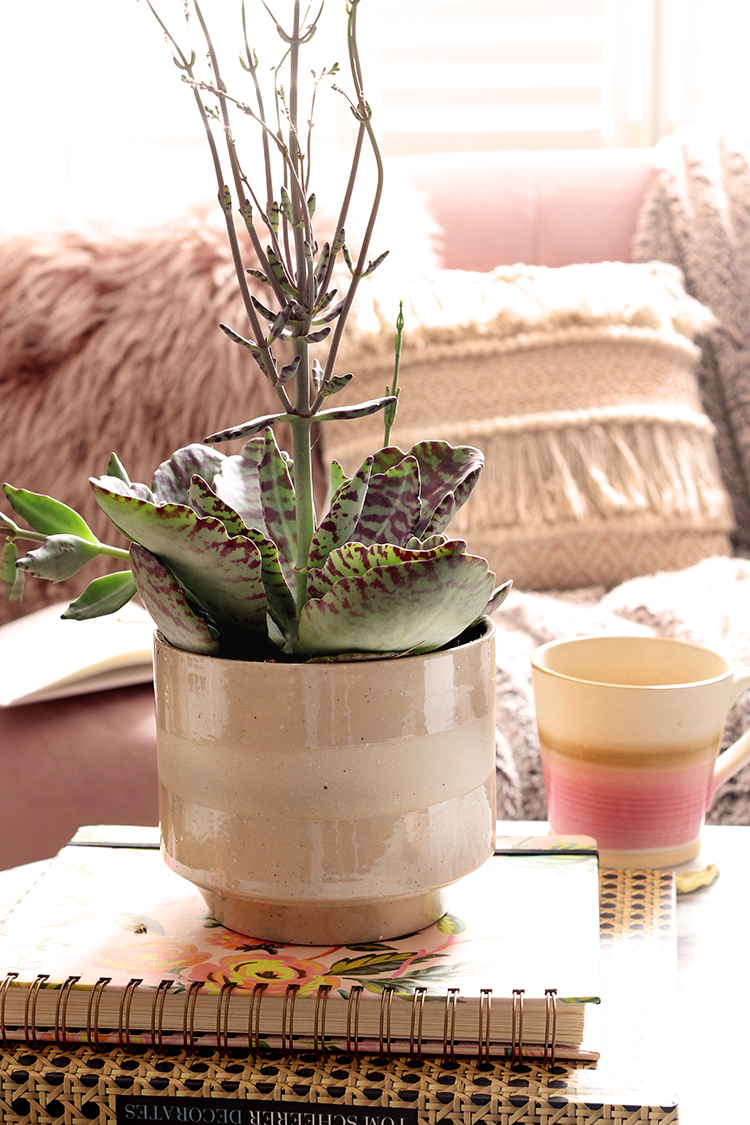 Succulent in brown pot on top of books with pink sofa in background