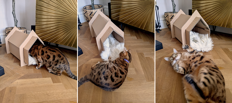 Meisha Cat House Trilogy